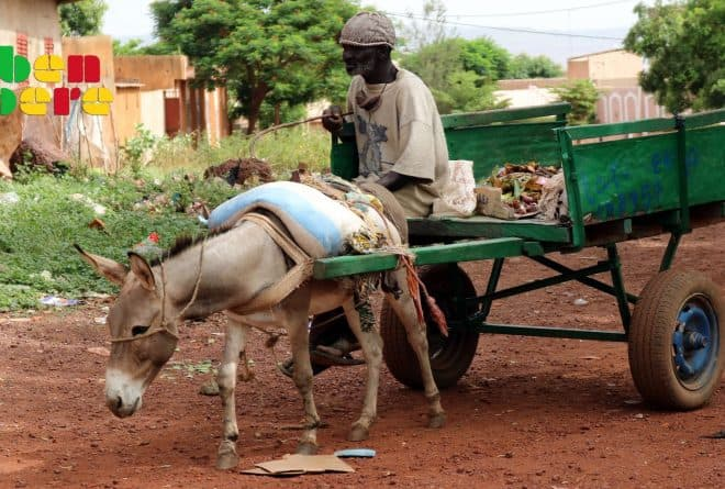 Haro sur les sévices infligés aux ânes