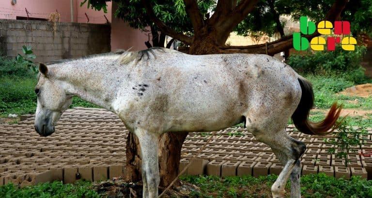 filles virginite garcons cheval_blanc_rue_arbre_brique_signe_virginite_Bamako_Mali