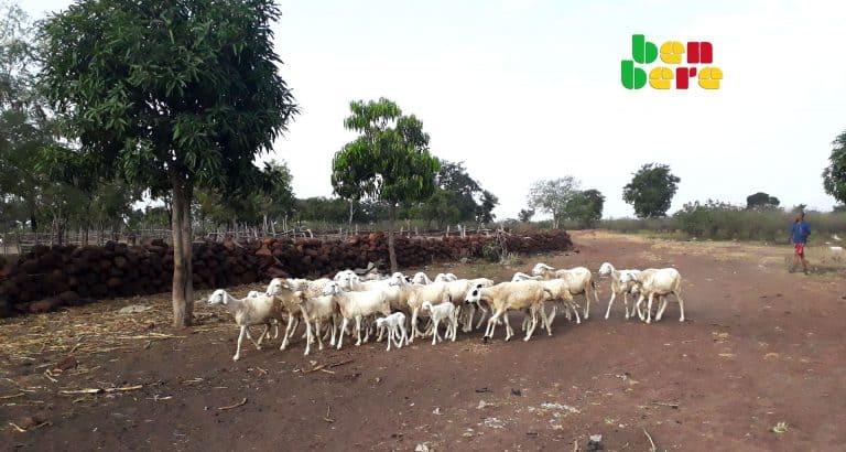 segou sanando animaux vivre ensemble animaux-village