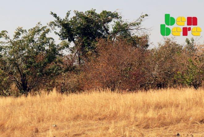 A Mopti, l'herbe est une richesse