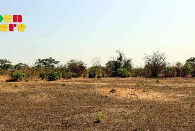 Koulikoro : le spectre de la déforestation plane sur Zambougou