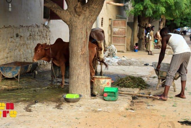 Mopti : à N'Gomi, l'exemple d'une cohabitation réussie