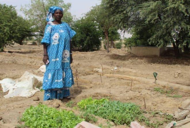 Goundam : le maraîchage bio, une aubaine pour les femmes