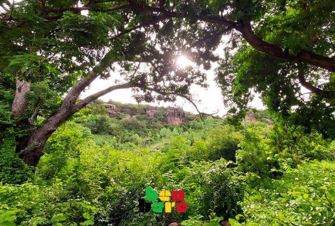 #Cop25çachauffe :  mais où sont les forêts classées au Mali ?