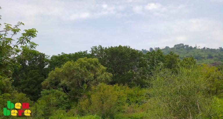 Kayes : silence, on détruit les forêts à Kéniéba