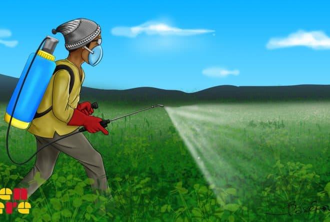 #StopPesticidesObsolètes : dans la culture du coton, les dangers de l'utilisation des pesticides