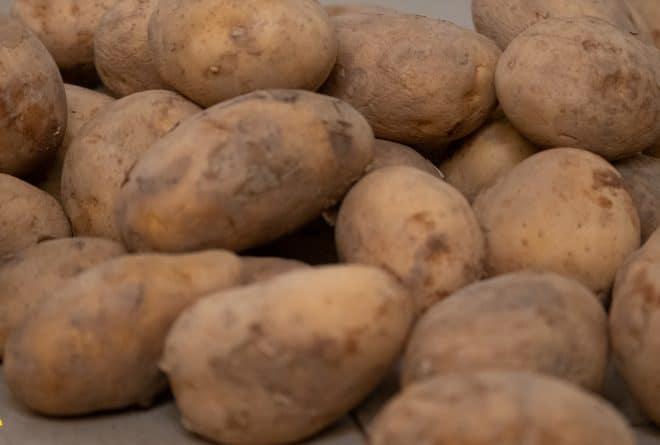 Tombouctou : à Kabara, la culture de la pomme de terre a le vent en poupe