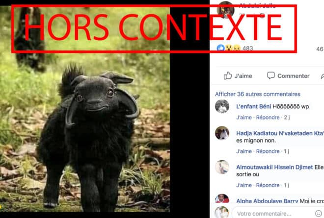 #BenbereVerif : cette photo n'illustre pas la découverte d'un « nouvel animal au sud du Soudan »