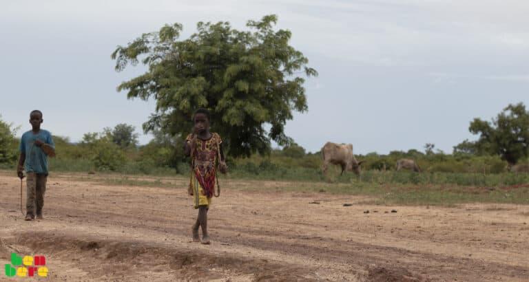 Alerte rouge à Bandiagara : les champs abandonnés à eux-mêmes