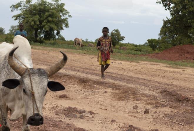 Mali : touché par la crise sanitaire et sociopolitique, le secteur du bétail peine à se relever