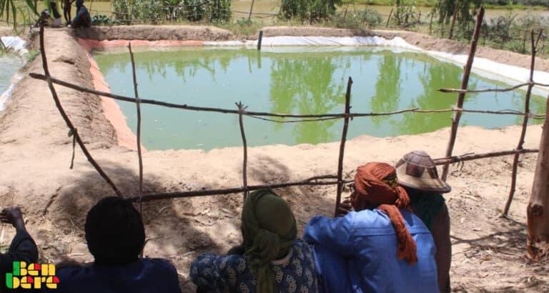 Goundam : ces étangs piscicoles qui font renaitre l'espoir