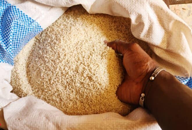 Culture du riz : pourquoi les petits producteurs ne s'en sortent pas