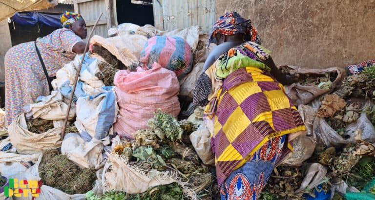 Santé : la tradi-thérapie, premier recours pour les patients au Mali