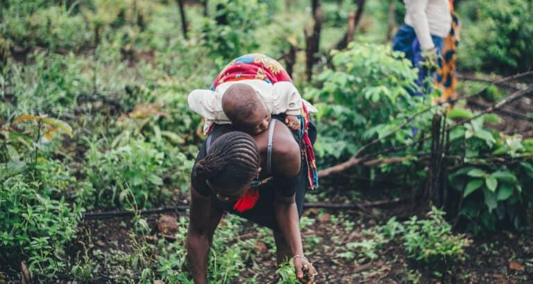 A Bintagoungou, des femmes assurent leur autonomie en misant sur la terre