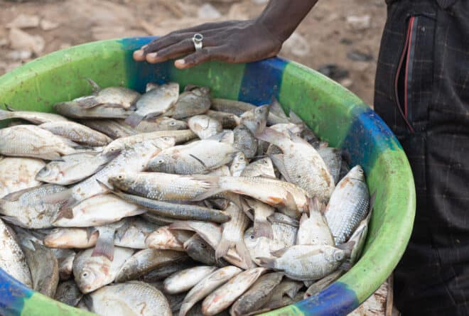 A Mopti, la pêche à l'épreuve de l'ensablement