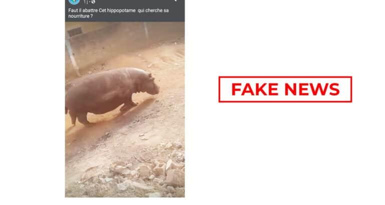#BenbereVerif : la vidéo de cet hippopotame n'a pas été tournée dans un village malien