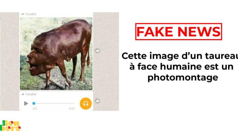 #BenbereVerif : cette image d'un taureau à face humaine est un photomontage